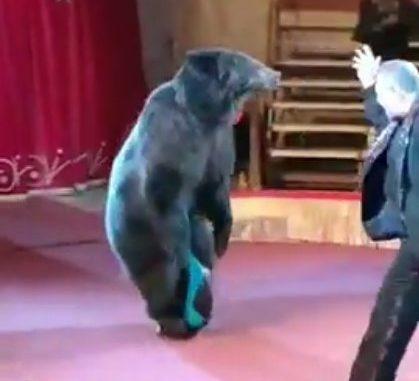 Медведь на моноколесе