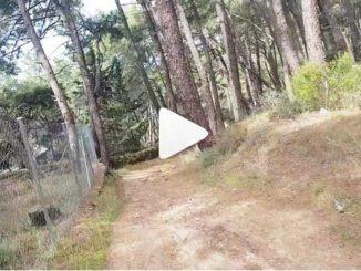 На моноколесе по лесу